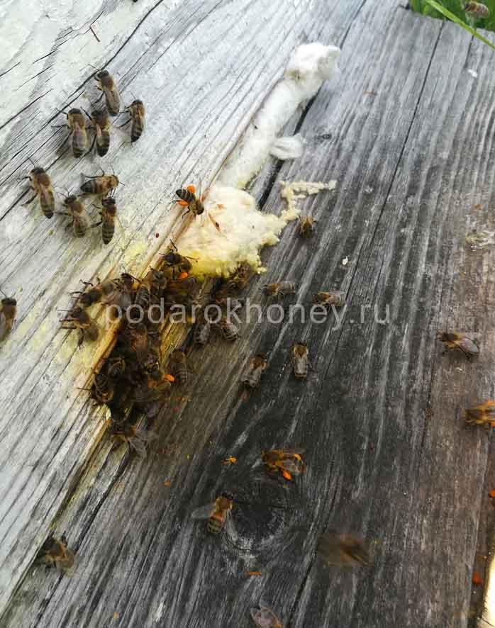 пчелы несут пыльцу в улей